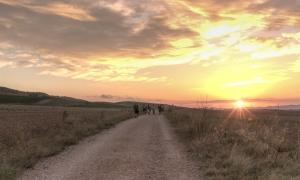 20140916-LosArco-Viana-17 Panorama-50x30